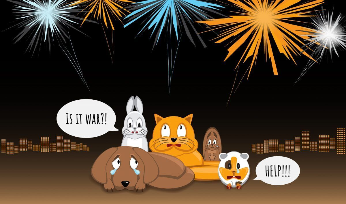 Top 10 Fourth of July Safety Tips for Your Pet
