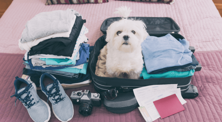 Pet Travel Exams
